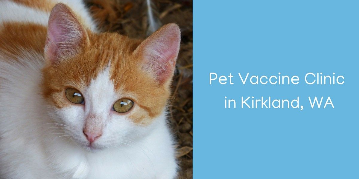 Pet-Vaccine-Clinic-in-Kirkland-WA