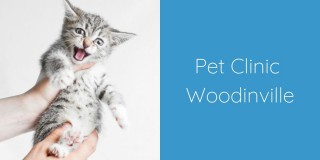Pet-Clinic-Woodinville