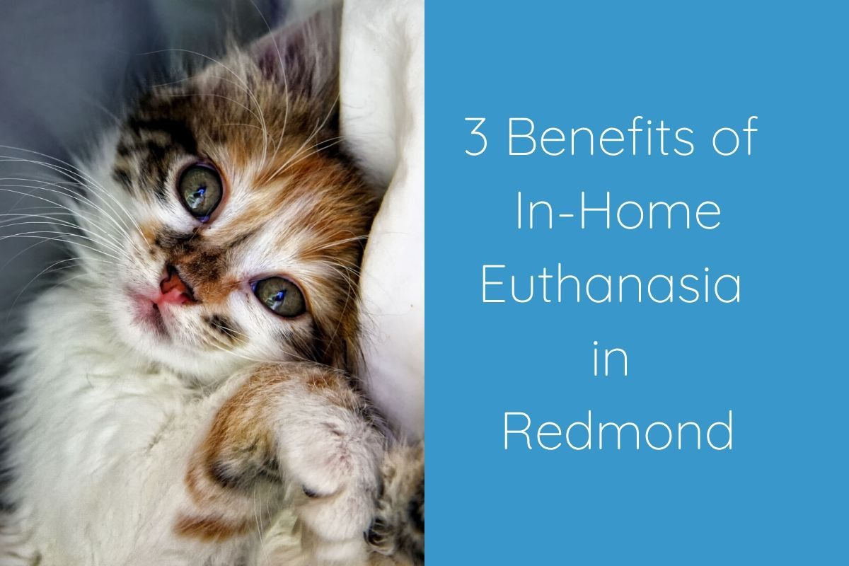 3-Benefits-of-In-Home-Euthanasia-in-Redmond