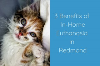 3-Benefits-of-In-Home-Euthanasia-in-Redmond